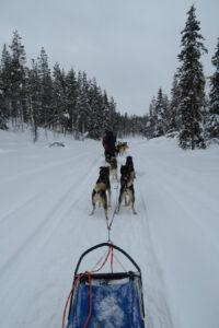 Huskysafari Lapland