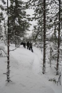 Wandelen winter Lapland