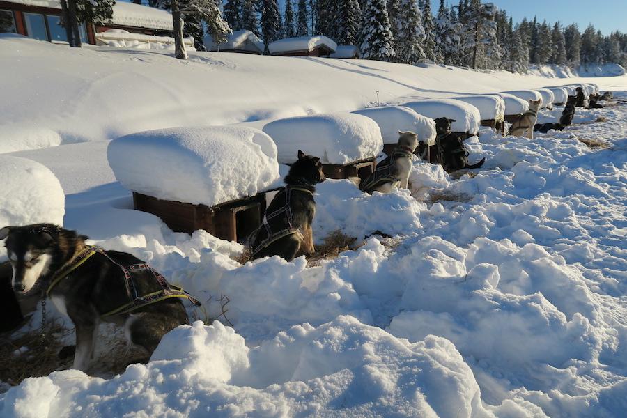 Reisvideo: husky safari Lapland