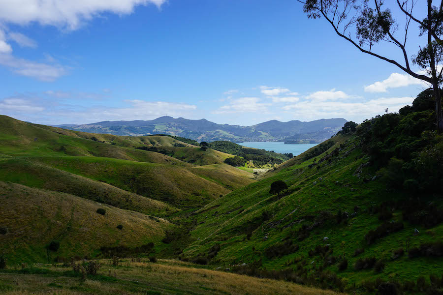 Highcliff road Otago Peninsula