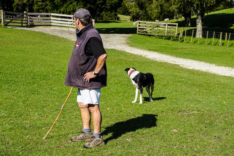 Schapenboer en zijn hond