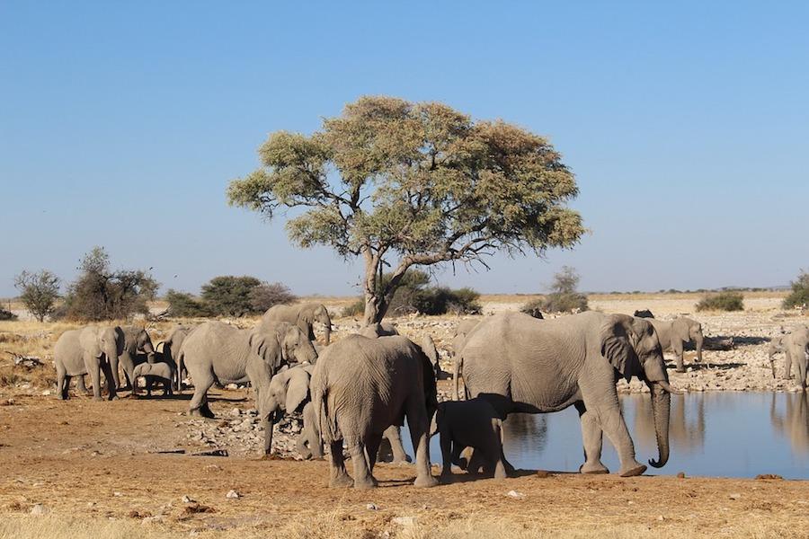 Hoe diervriendelijk is een olifantenopvang?