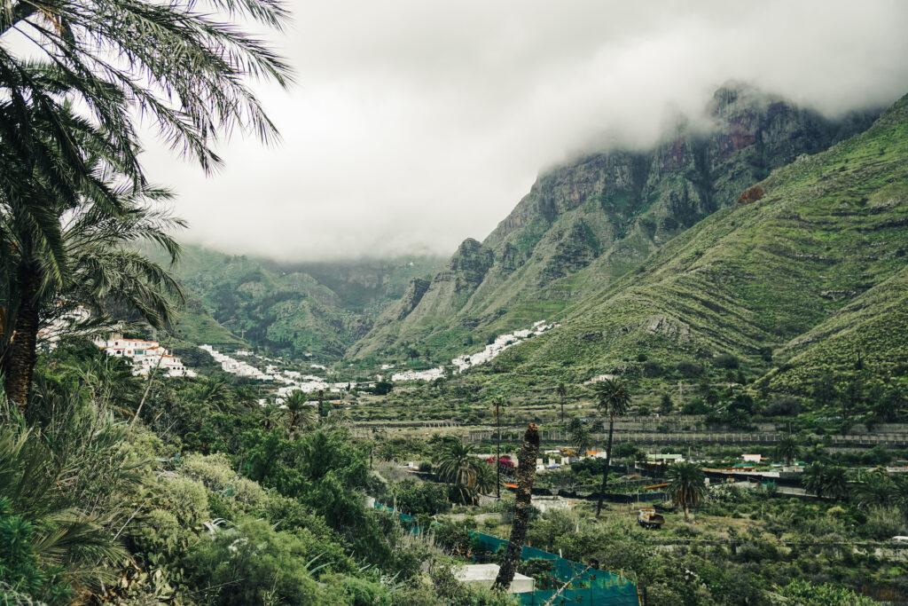 Koffieplantage Agaete vallei