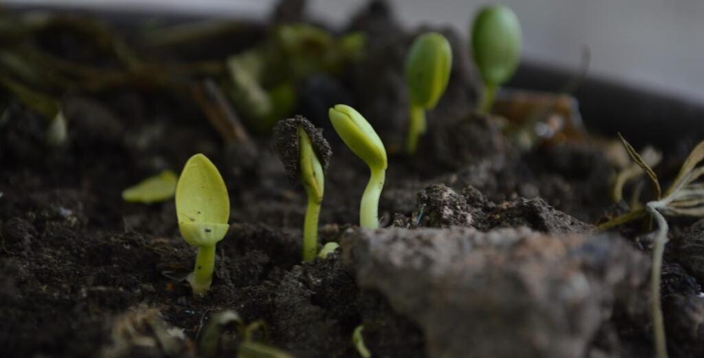 Duurzaamheidsblog