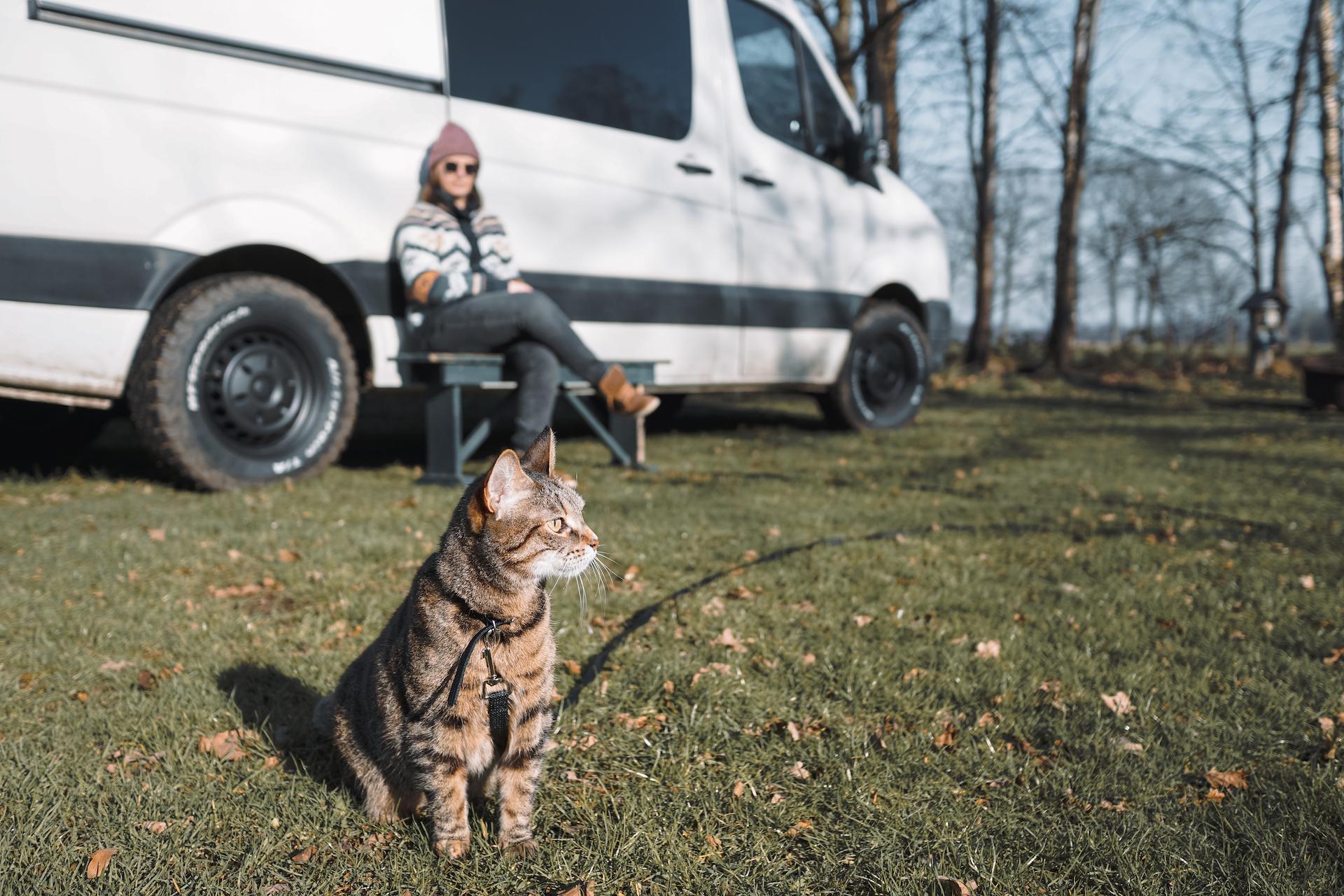 Kat mee op reis in de camper